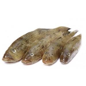 Baila Fish Block 500g.
