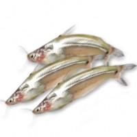 Batashi Fish Block 250g