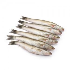 Bata Fish Block 500g