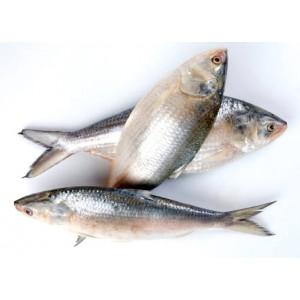 Hilsha Fish (1 to 1.2 kg each)* $31.99/kg