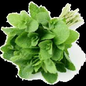 Mint Leaf- 1bunch